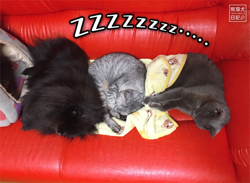 20181128_眠り猫2