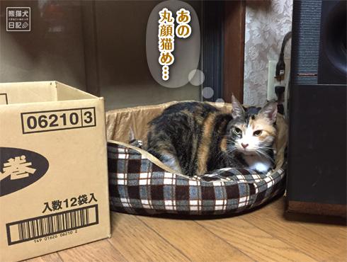 20181128_眠り猫8