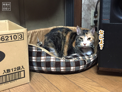 20181128_眠り猫9