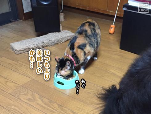 20181129_ごはん催促6