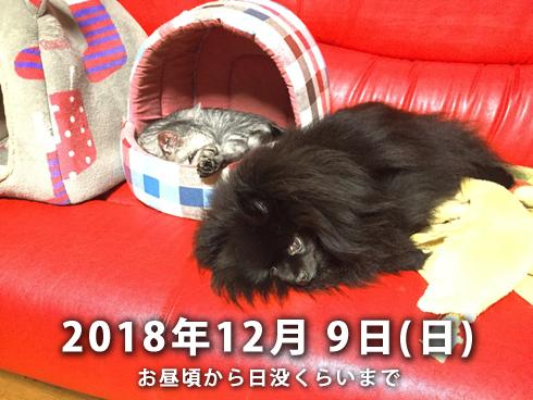 20181202_駒沢公園2