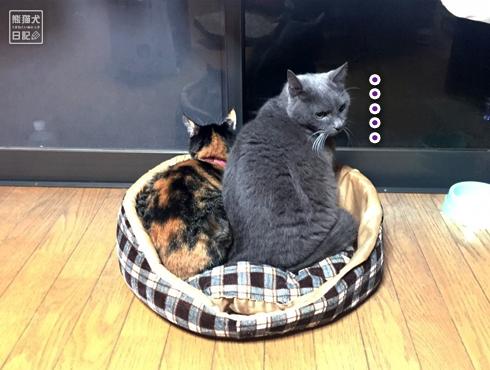 20181221_夫婦猫3