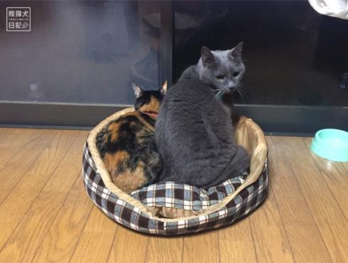 20181221_夫婦猫6