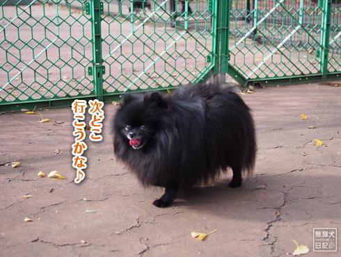 20190115_駒沢公園11
