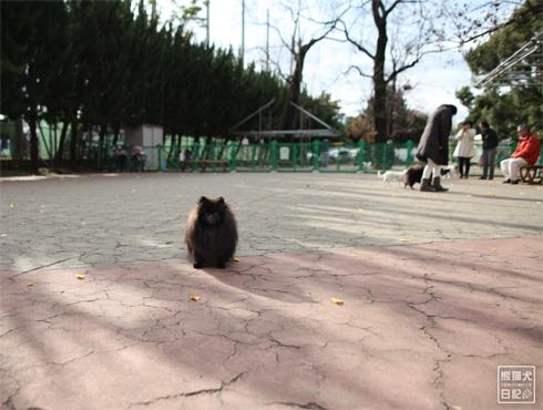 20190118_駒沢公園1