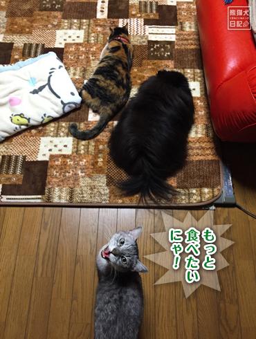 20190126_動物たち5