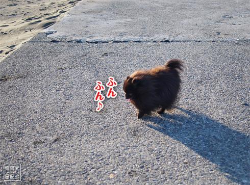 20190311_九十九里浜3