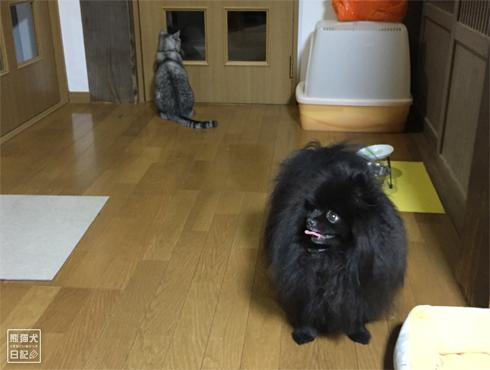 20190315_千葉の家1