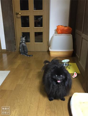 20190315_千葉の家4