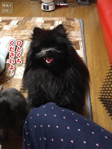20190323_真熊おねだり5