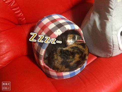 20190326_夫婦猫3