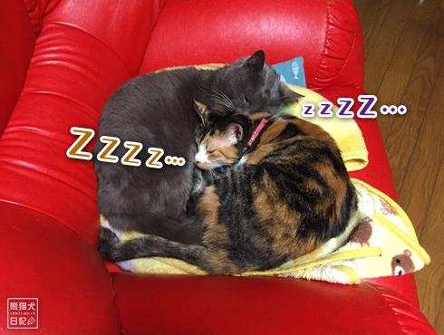 20190326_夫婦猫7