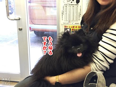 20190430_狂犬病予防接種10