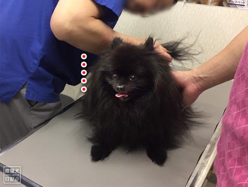 20190430_狂犬病予防接種11