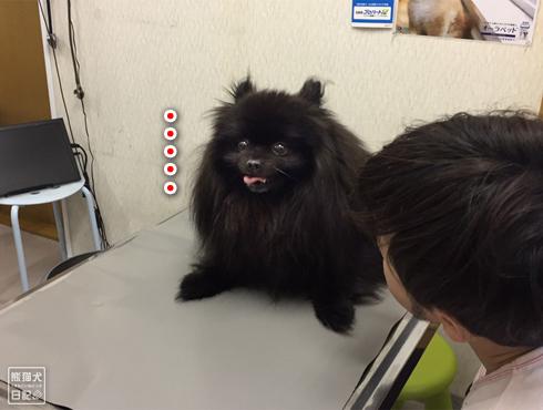 20190610_真熊ワクチン11