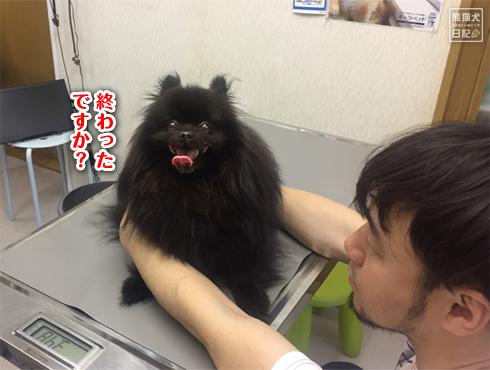 20190611_真熊ワクチン3
