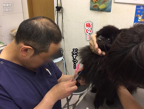 20190611_真熊ワクチン7