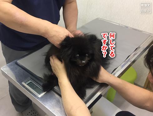 20190611_真熊ワクチン10