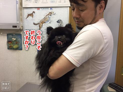 20190611_真熊ワクチン11