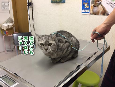 20190612_寿喜ワクチン7