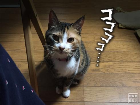 20190615_夫婦猫2