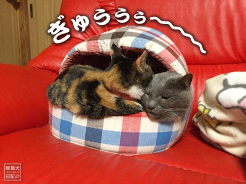 20190615_夫婦猫3