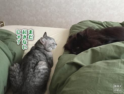 20190630_寝起き3