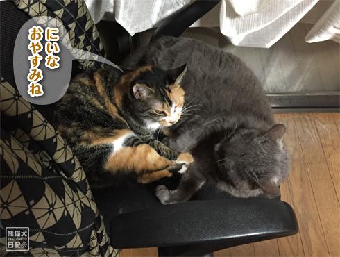 20190706_夫婦猫5
