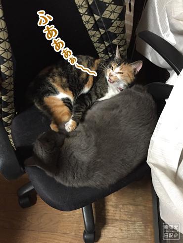 20190706_夫婦猫7