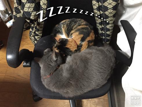 20190706_夫婦猫8