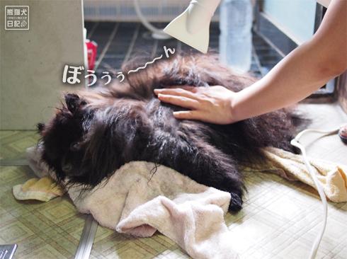 20190727_真熊シャンプー9