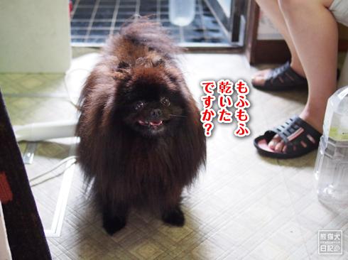 20190727_真熊シャンプー11