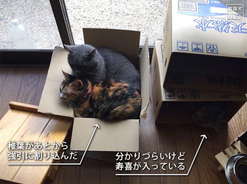 20190816_箱猫7