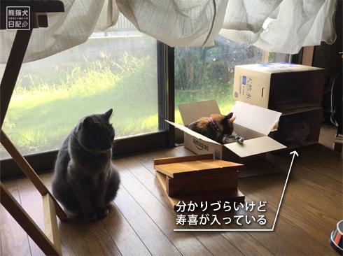 20190816_箱猫3