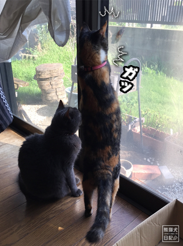 20190824_猫とセミ4
