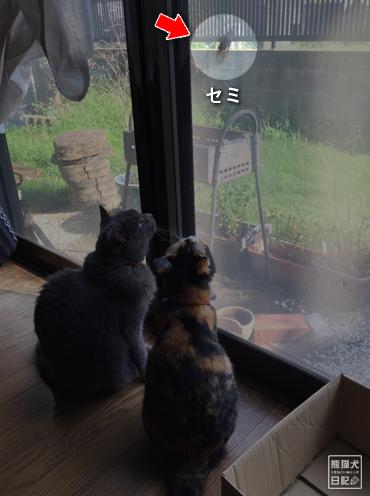 20190824_猫とセミ3
