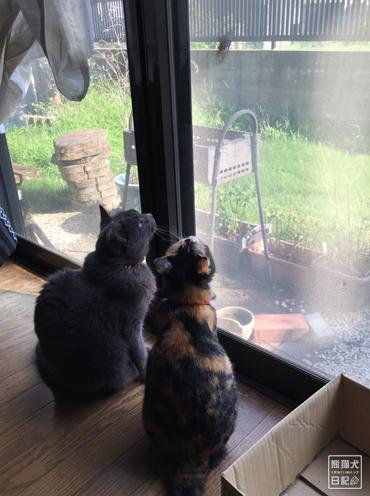 20190824_猫とセミ2