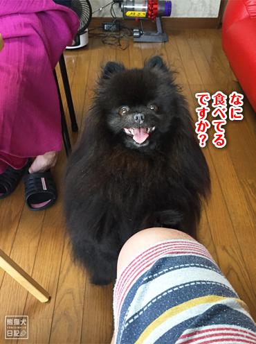 20190825_真熊2