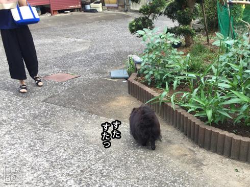 20190826_真熊と寿喜10