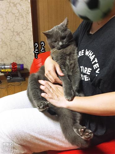 20190828_石像猫8