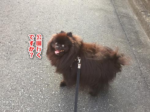 20190829_まぐ散歩6