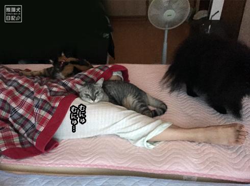 20190901_動物たちの寝起き3