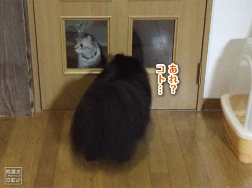20190902_真熊と志熊5