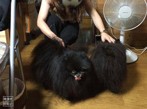 20190902_真熊と志熊4