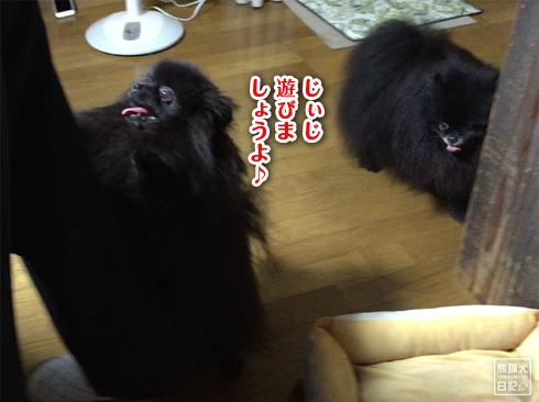 20190902_真熊と志熊3