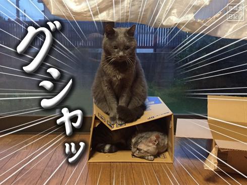 20190905_おもしろ猫7