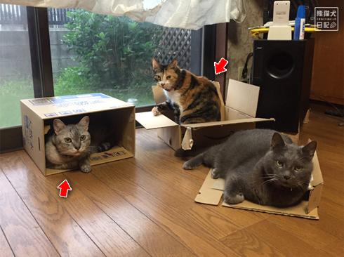 20190905_おもしろ猫3