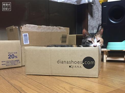 20190905_おもしろ猫1