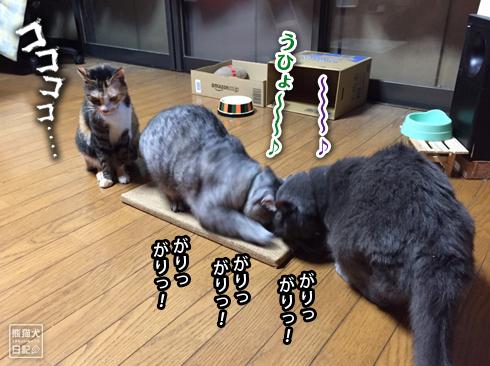 20190906_爪とぎ7
