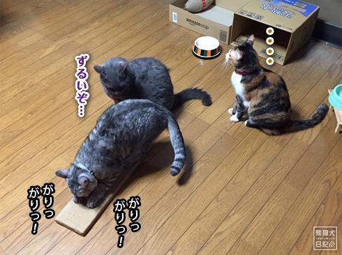 20190906_爪とぎ10